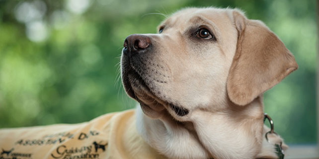 Web Accessibility Training Leads to a Guide Dog